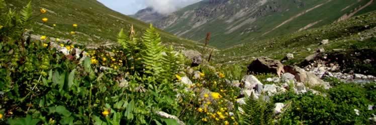 Ani ısı ve iklim değişikliği arıların performansını etkiliyor